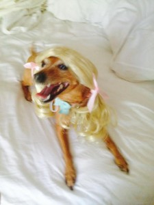 Meet Tracy's dog Bella, who likes to play dress up.