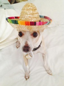 Tracy's pup Hero is ready for a margarita.